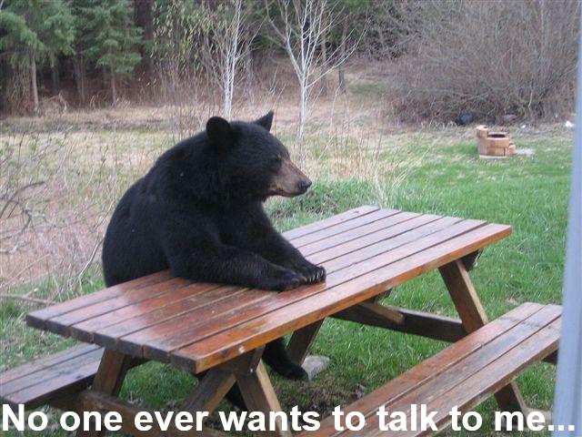 patient bear meme